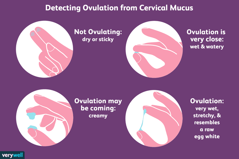 Diagram about how to detect ovulation from cervical mucus.
