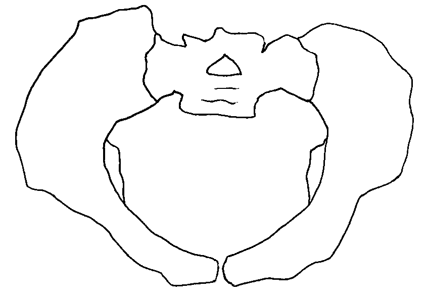 Human and chimpanzee pelvis.