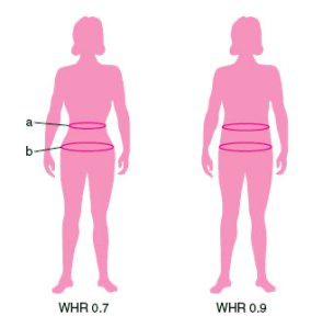 Diagram of two female's showing waist-to-hip ratios.