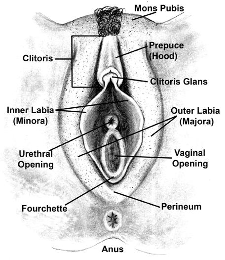 Diagram of the vagina.