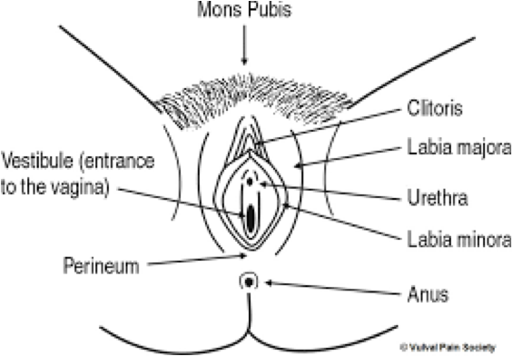 Diagram of the female reproductive system.