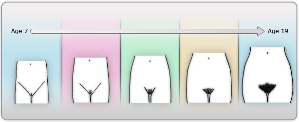 Stages of body hair through puberty.