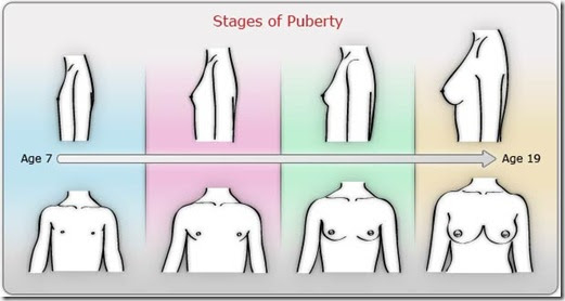 Stages of puberty chart.