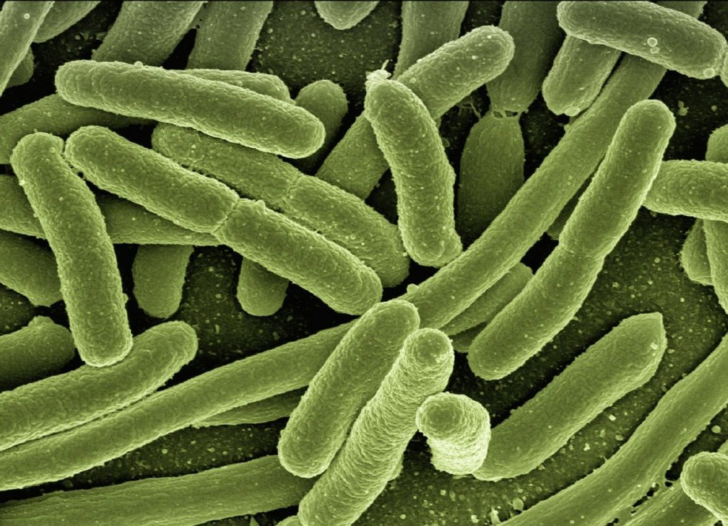 A close up of bacteria