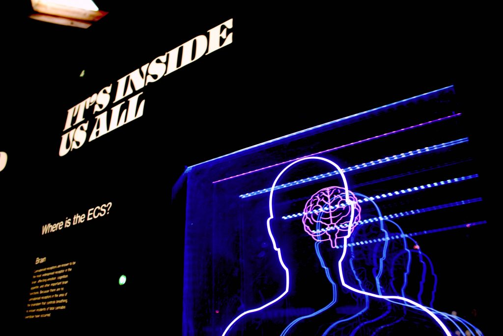 """A lit-up sign of a head with a brain inside. """"It's inside us all"""" is written next to the lit-up sign."""